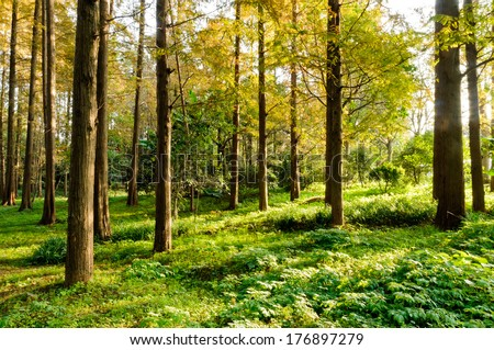 autumn forest trees. nature green wood sunlight backgrounds.  #176897279