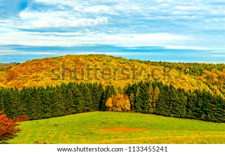 Autumn forest trees panoramic landscape. Autumn forest background in sunny day. Autumn mountain forest trees panorama