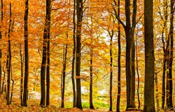Autumn forest trees scene view. Forest trees in autumn. Autumn forest trees background. Autumn forest scene