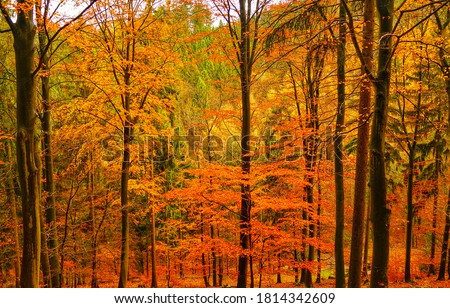 Autumn forest trees view. Autumn in forest. Golden autumn in forest. Forest in autumn