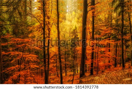 Autumn forest trees view. Golden autumn in forest. Forest autumn fall scene. Red autumn forest trees