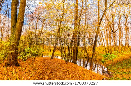 Autumn forest trees water view. Autumn forest scene. Forest in autumn. Autumn water in autumnal forest