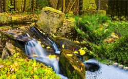 Autumn forest waterfall stream view. Forest waterfall creek in autumn. Autumn forest waterfall stream. Waterfall in autumn forest
