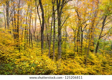 Autumn Forest Western NC Fall Foliage Trees Scenic Nature Photography with vibrant maple, oak, and ash