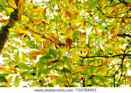 autumn forest with colorful leaves  #710789095