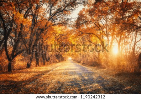 Autumn forest with country road at sunset. Colorful landscape with trees, rural road, orange and red leaves, sun in fall. Travel. Autumn background. Amazing forest with vibrant foliage in the evening
