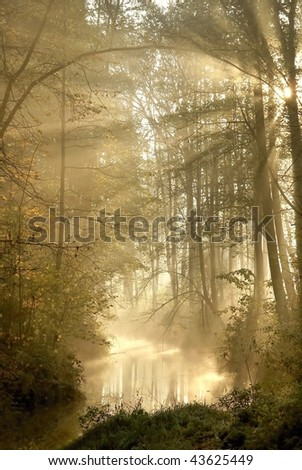 Autumn forest with mist floating over the river and the sun shining between the trees.