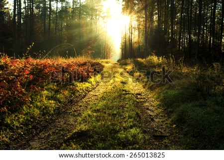 Autumn forest with Road and Sunbeams in north Poland.Pomerania province/ Autumn Forest Landscape