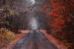 Autumn forest with rural road. Real wonder of autumn nature. Dirt road through autumn colorful foliage. Autumn tunnel through wooded countryside.