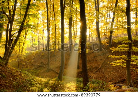 Autumn forest with sun beam - Shutterstock ID 89390779