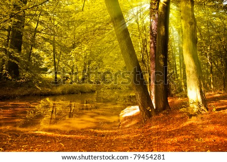 Autumn Forest with sun beams