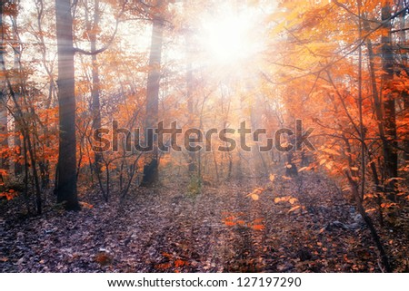 Autumn forest with sunbeams