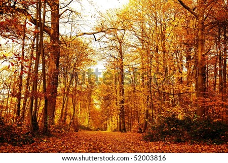 autumn forest with the sun rays