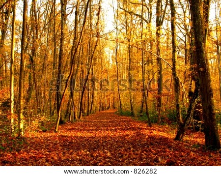 Autumn forest with vanishing point