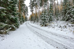 Autumn forest with yellow leaves in the snow trees and road concept, forgiving autumn, hello winter, christmas, new year