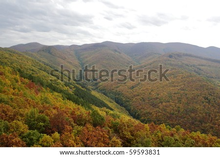 Autumn forrest in the mountains