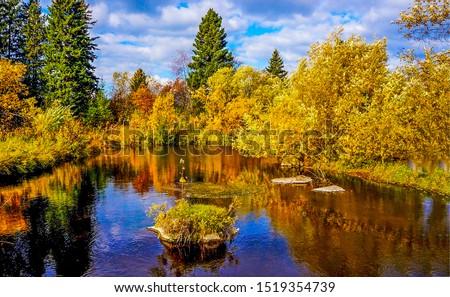 Autumn forrest trees pond landscape. Forrest trees autumn pond view