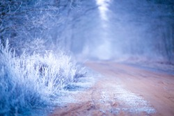Autumn frost. Hoarfrost on grass and trees. Weather forecast background. Copy space.