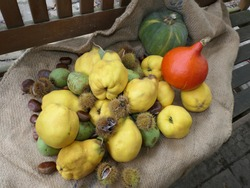 Autumn Fruits Such As Quinces, Pears, Sweet Chestnuts And Pumpkins On A Sack, Still Life