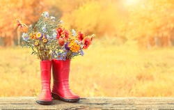 autumn garden flowers in red rubber boots, natural background. harvesting concept. rustic fall seasonal composition. copy space