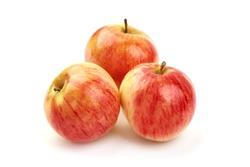 Autumn Glory apples, isolated on white background.