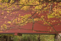 Autumn golden leaf colors against the red Roddy Road Covered Bridge near Thurmont MD.