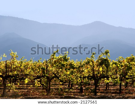Autumn grape leaves at California winery with mountains on the background