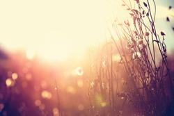 Autumn grass and wildflower background. Instagram effect