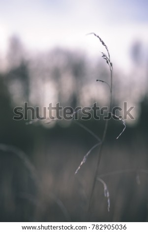 autumn grass bents against dark background in warm day. countryside - vintage film look #782905036