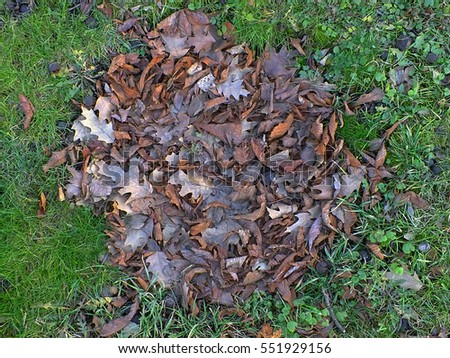 autumn grass greens leaves rotten #551929156