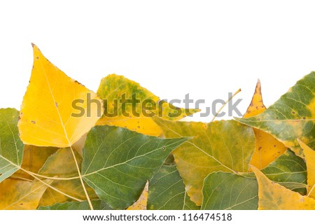 Autumn green and yellow leaves closeup background