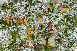 Autumn hail. Fallen leaves. Autumn. Russia