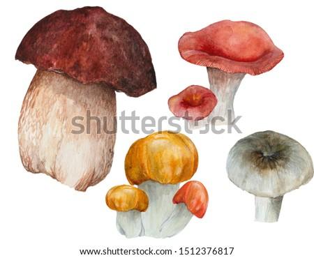 Autumn hand drawn watercolor illustration, painted set of mashrooms Foto stock ©
