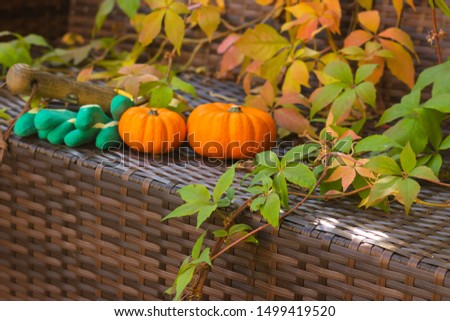 Autumn Harvest at Sunset. Orange Pumpkins, Golden Leaves and Tools are on a Wicker Bench With Sunbeams in Fall Garden. It`s a Symbol of Thanksgiving Day. #1499419520