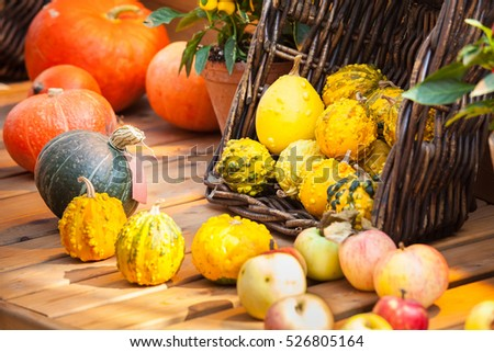 Autumn harvest background with small decorative pumpkins on the table #526805164