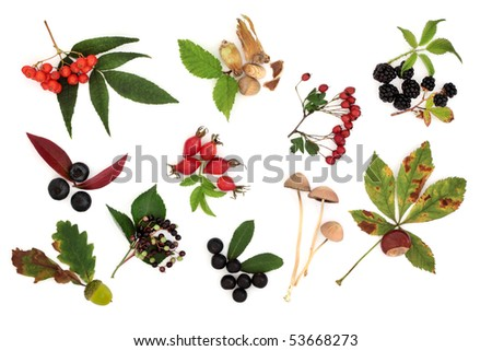 Autumn harvest collection of wild fruit, nuts and berries with leaves, isolated over white background.