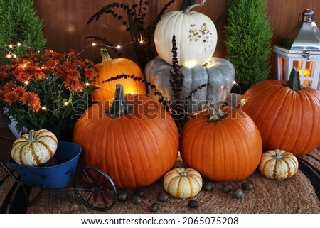Autumn harvest decorations with colored pumpkins, mums