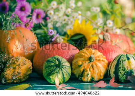 Autumn harvest in the garden: pumpkin fruits and colorful flowers plants #494040622