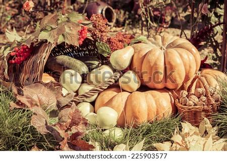 Autumn harvest. Pumpkin apples pears nuts viburnum outdoors in sunny autumn day.