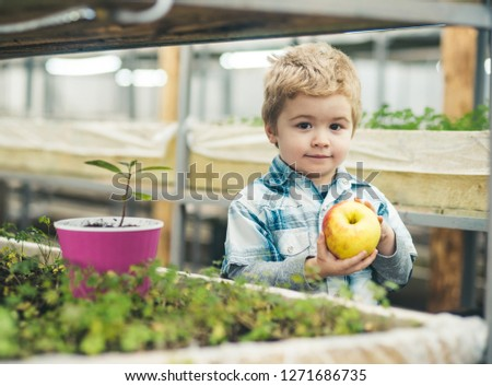 autumn harvesting. autumn harvesting with happy healthy kid. fresh apples. little boy farmer keeping autumn harvesting. autumn harvesting concept. #1271686735