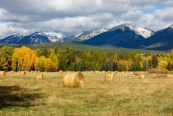 Autumn hay bales in field with distant snow capped mountains in background, Montana