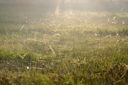 Autumn, height of Indian summer. Myriads of young spiders travel by webs. Cobweb shrouded in all plants. Evening time.