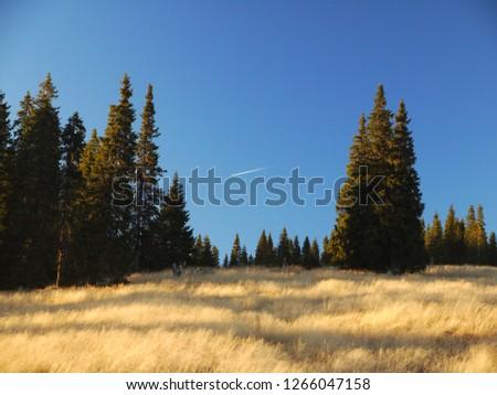 Autumn image from cindrel mountains,romania Imagine de stoc ©