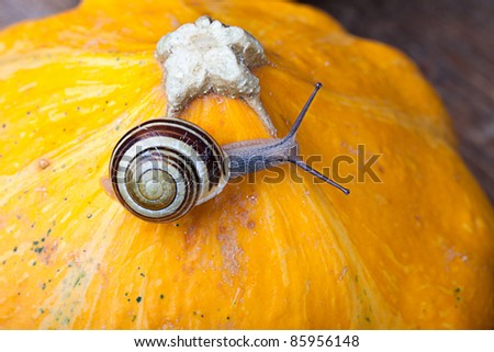 Autumn Image with small banded garden snails and Pumpkins