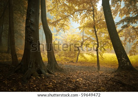 autumn in a colorful forest with orange leafs