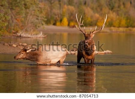 Autumn in Alberta, Canada