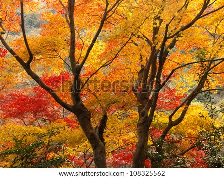 Autumn in Arashiyama, Kyoto, Japan - stock photo
