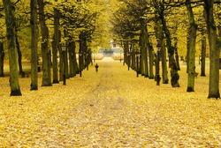 Autumn in Boston Public Garden