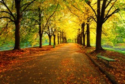 Autumn in city park. Colorful leaves in sun light. Empty bench near the tree. Beauty nature scene at fall season