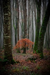 Autumn in Emo Woods, Emo, County Laois, Ireland